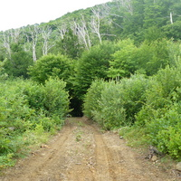 Лес 2 (Краснодарский край)
