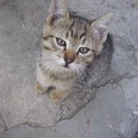 Маленький тигра