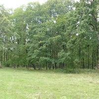 Лес 1 (р. Адыгея)