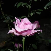 Цветы 6 (Крым)