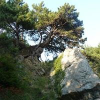Горы 10 (Крым)