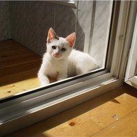 Белый кот серое ухо ;)