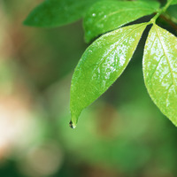 листья
